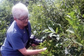 Press photos/Barbara McRae - Rita St. Clair, secretary of the FROG board, examines hops found growing on the Greenway. They were probably cultivated by Timoxena Siler Sloan, who farmed this land in the 19th Century.